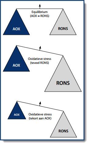 oxidatieve stress betekenis