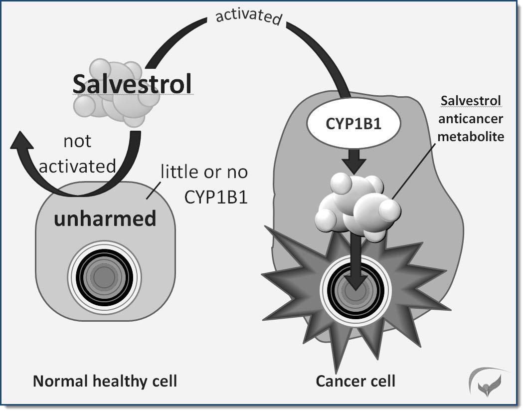 Working mechanism of salvestrols