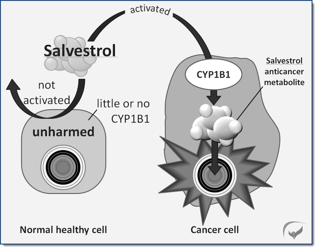 Working mechanism of salvestrols